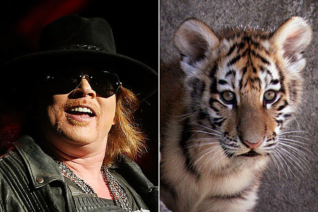 Axl Rose and Tiger