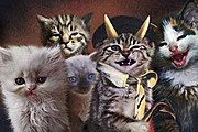 What If Kittens Were on Your Favorite Rock Album Covers?